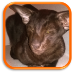 Garde de chats à domicile Visite de chats à domicile Cat Sitting Paris Ile de France 75016