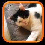 Garde à domicile Cat Sitter Cat Sitting Croissy-Sur-Seine Yvelines Paris Hauts-de-Seine