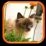 Cat Sitter Garde de chat à domicile Paris Hauts de Seine Ile-de-France