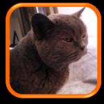 Visite de chat à domicile Garde de chats à domicile Cat Sitting Cat Sitter Paris Hauts de Seine Chatou