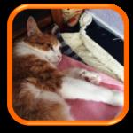 Garde de chat à domicile Cat Sitting Bagneux Chatou Clamart Hauts de Seine Paris