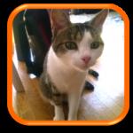Cat sitting garde de chats à domicile houilles yvelines hauts-de-seine paris