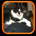 Garde de chat à domicile Cat sitting Cat Sitter Hauts de Seine Paris 92 75 Vaucresson Ville d'Avray