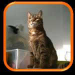 Garde à domicile Soins à domicile Cat Sitting Cat Sitter Clamart 92140 Hauts de Seine 92 Paris 75 Ile de France