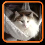 Cat Sitting - Garde et visite de chats à domicile Paris 75015 75016 Hauts de Seine 92 Yvelines 78