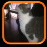 Cat sitter Garde de chat Saint Germain en Laye Versailles Paris Yvelines Hauts de Seine