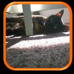 Garde à domicile Soins à domicile Cat Sitting Cat Sitter Bagneux 92220 Yvelines 78 Hauts de Seine 92 Paris 75 Ile de France