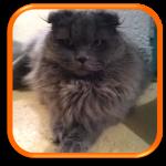 Cat Sitting Garde de chats à domicile Soins à domicile Paris 75 Hauts-de-Seine 92 Yvelines 78