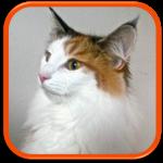 cat sitting garde de chat à domicile paris hauts de seine yvelines feucherolles saint nom la bretèche
