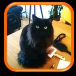 Courbevois Garde de chat Cat sitting Gardiennage de chat Garde d'animaux Hauts de Seine Paris