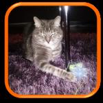 Garde à domicile Soins à domicile Cat Sitting Cat Sitter Saint-Cloud 92210 Yvelines 78 Hauts de Seine 92 Paris 75 Ile de France
