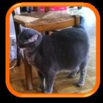 Cat Sitting Cat Sitter Garde de chat à domicile Paris Ile de France 75020 75019 75018 75017 75016 75015 75014 75013 75012 75011 75010 75009 75008 75007 75006 75005 75004 75003 75002 75001