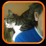 Garde à domicile Soins à domicile Cat Sitting Cat Sitter Garches 9280 Yvelines 78 Hauts de Seine 92 Paris 75 Ile de France