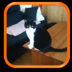Garde de chat à domicile Cat Sitter Hauts-de-Seine Puteaux Courbevoie Suresnes Colombes Bois-Colomves Nanterre
