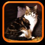 Neuilly-sur-Seine Garde de chats à domicile Gat Sitting Gardiennage de chats Hauts-de-Seine Paris 75
