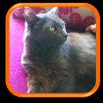 Visite de chat à domicile Garde de chat à domicile Cat Sitting Paris Hauts de Seine Issy les Moulineaux Sèvres Boulogne Billancourt Vanves