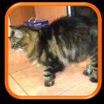 Garde à domicile Soins à domicile Cat Sitting Cat Sitter Saint-Germain-en-Laye 78100 Yvelines 78 Hauts de Seine 92 Paris 75 Ile de France