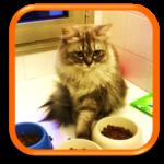 Gardiennage de chat Pet Sitting Cat sitter Paris Levallois Saint Cloud