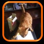 Garde à domicile Cat Sitter Cat Sitting La Garenne Colombes 92 Hauts-de-Seine Paris