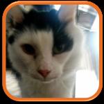 garde de chat cat sitter puteaux courbevoie clam art chaville colombes nanterre