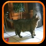 Visite de chat à domicile Garde de chat à domicile Cat Sitting Paris Yvelines Ile-de-France Houdan