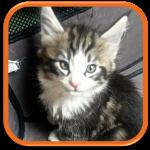 garde de chat à domicile vélizy paris levallois hauts de seine yvelines
