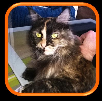 cat sitting garde et soins pour chat votre domicile le phil la patte clients. Black Bedroom Furniture Sets. Home Design Ideas