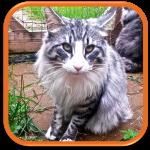 cat sitter fader chat boulogne billancourt issy les moulineaux vanves meudon sèvres chatillon