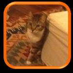 Cat Sitting Garde de Chat Neuilly sur Seine