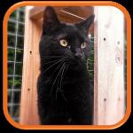 cat sitter garde chat à domicile guyancourt saint quentin en yvelines orgeval verneuil