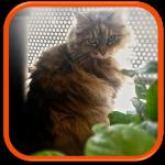 Cat sitting garde de chat saint denis poissy versailles le vesinet vaucresson ville d'avray