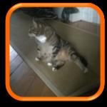 Cat Sitting Garde de chats à domicile Paris Hauts-de-Seine Yvelines Levallois-Perret Neuilly-sur-Seine Issy-les-Moulineaux Vanves
